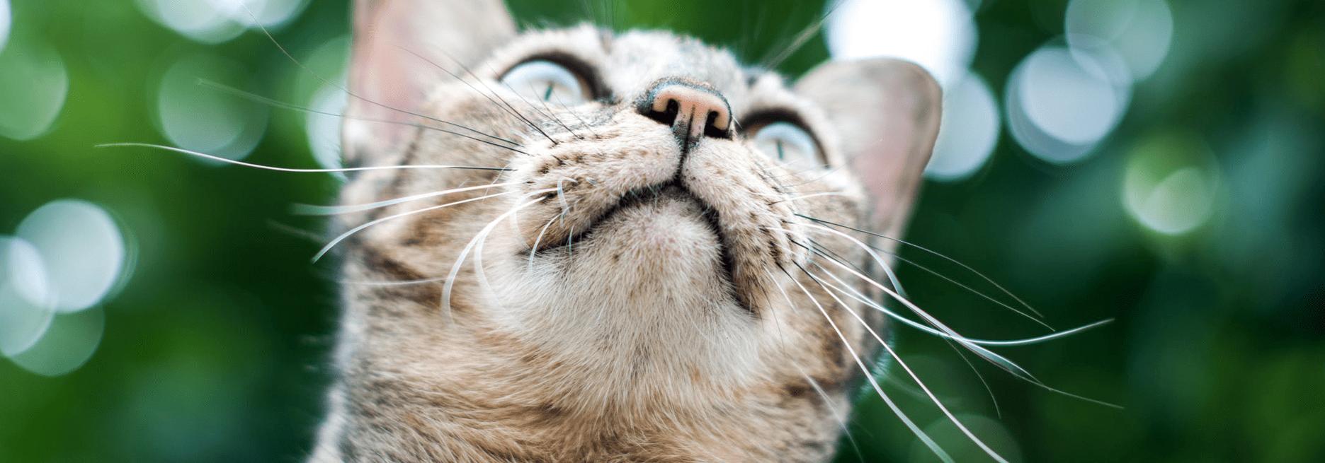 IoT Pet Trackers-min